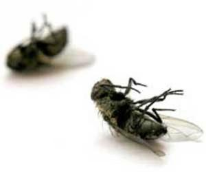 20120806_flies