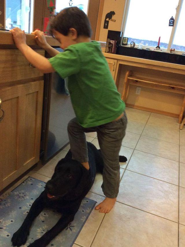 dog and trig