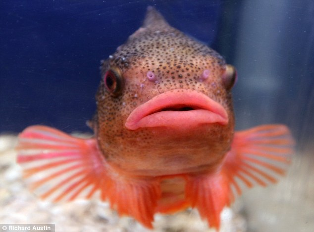 fishlips2