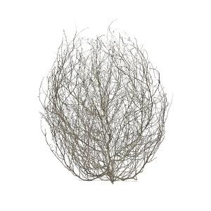bale-creek-allen-tumbleweed-2